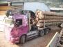 Arrivage des bois