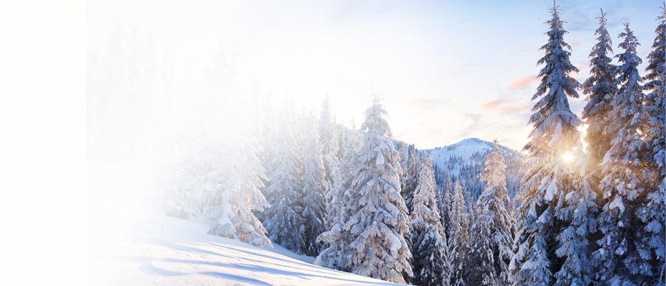 Scierie Chenu à Aime en Savoie